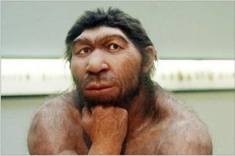 Ученые попытаются вырастить мозг неандертальца