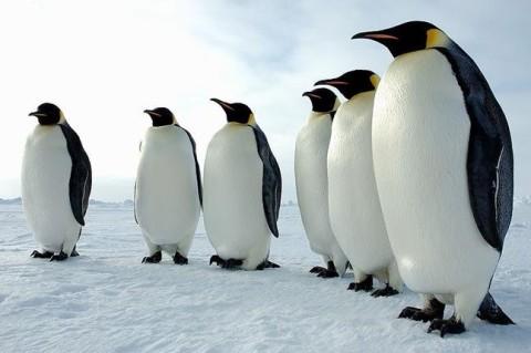 В Новой Зеландии нашли кости древнего гигантского пингвина