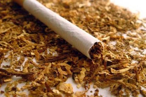 Ученые обнаружили уникальное свойство табака