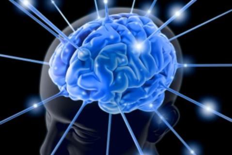 Ученые назвали область мозга, отвечающую за контакт со