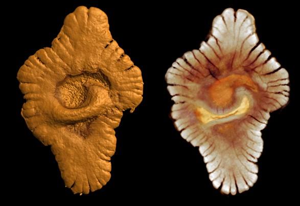 Археологи нашли останки самого древнего животного