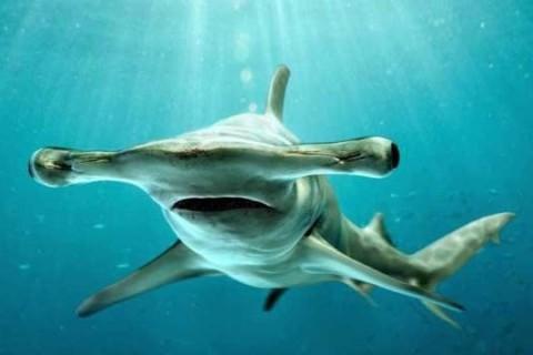Акула-веган: ученые сделали новое открытие