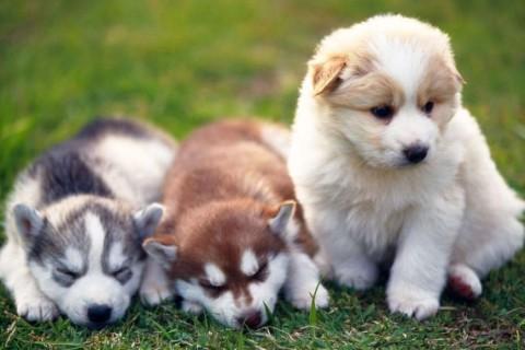 Ученые заявили, что собаки понимают человеческий язык