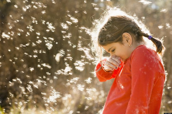 В «Яндекс.Погоду» добавили карту пыльцы для аллергиков
