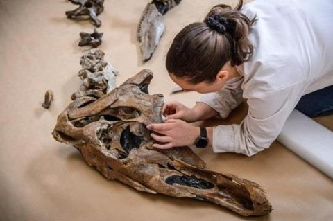 В Италии палеонтологи обнаружили останки старейшего динозавра
