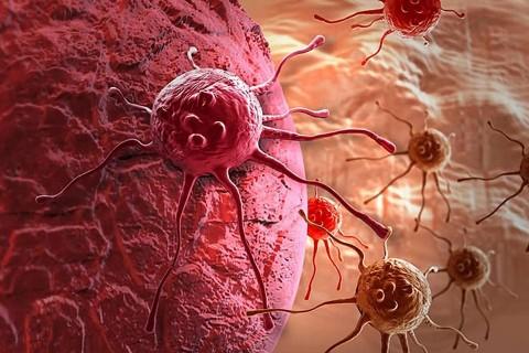 Американские ученые нашли средство лечения смертельных форм рака