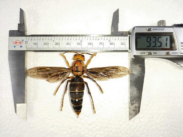 В Китае обнаружили неизвестное науке насекомое
