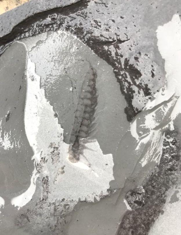 В Китае обнаружили уникальные древние окаменелости возрастом более полмиллиарда лет
