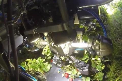 В США разработали робота для сбора клубники