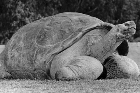 Ученые Якутии нашли останки черепах, которых жили 130 млн лет назад