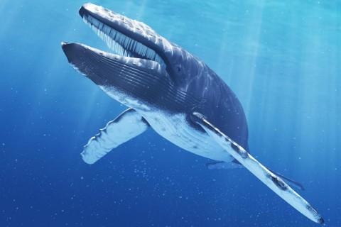 В Италии обнаружили рекордно большой скелет синего кита