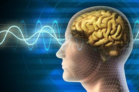 Ученые засняли работу мозга в реальном времени