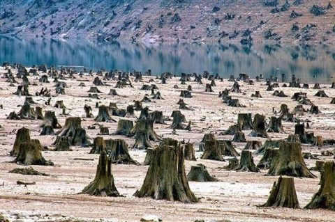 Исследование: Человечество исчерпало запас ресурсов Земли на 2019 год
