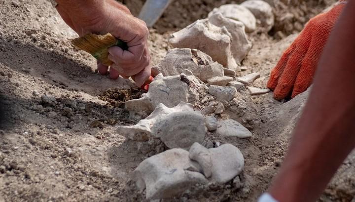 В Крыму нашли останки кита возрастом десять миллионов