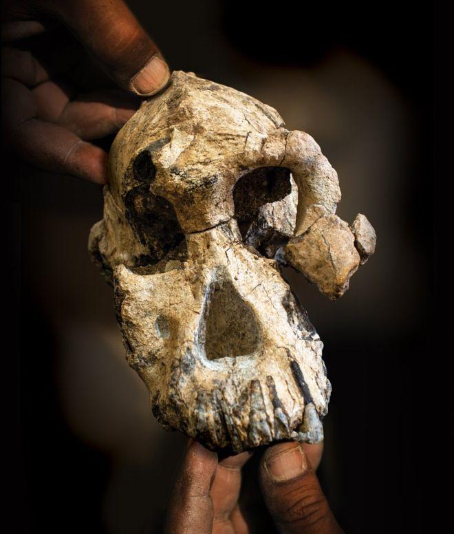 В Эфиопии нашли череп древнейшего вида австралопитека