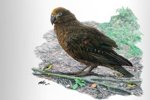 Ученые нашли останки гигантского попугая, жившего 19 млн лет назад