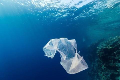 Люди загрязнили 60% мирового океана