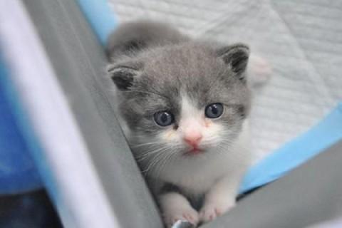 Китайская компания впервые в истории клонировала котенка