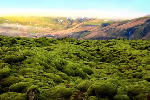 Ученые заявили, что растения на планете начали вымирать в 350 раз быстрее