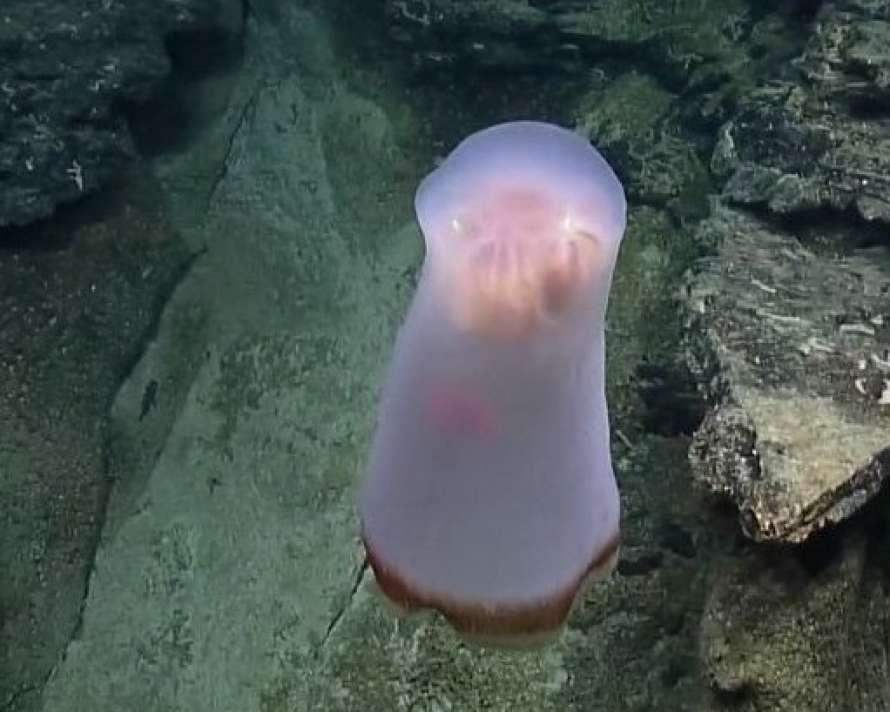 В Тихом океане обнаружили загадочное глубоководное существо