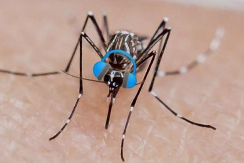 Комар не пройдет: ученые придумали одежду, отпугивающую насекомых