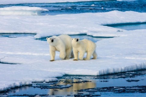 Площадь арктических льдов достигла рекордного минимума