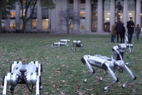 В университете США выгуляли роботов-собак