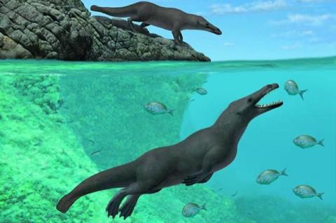 Ученые назвали вид животных, которые первыми смогли жить на суше