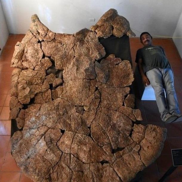 Археологи обнаружили останки гигантской древней черепахи
