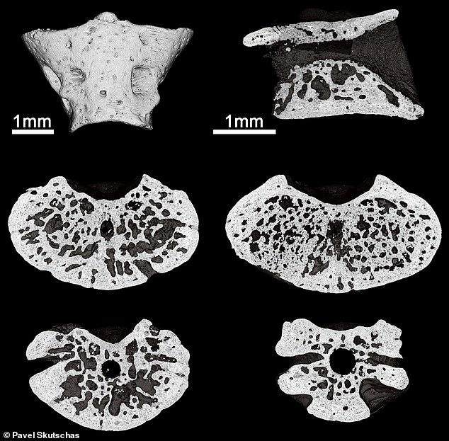 Палеонтологи нашли в Сибири самую древнюю саламандру в мире, которой почти 170 млн лет