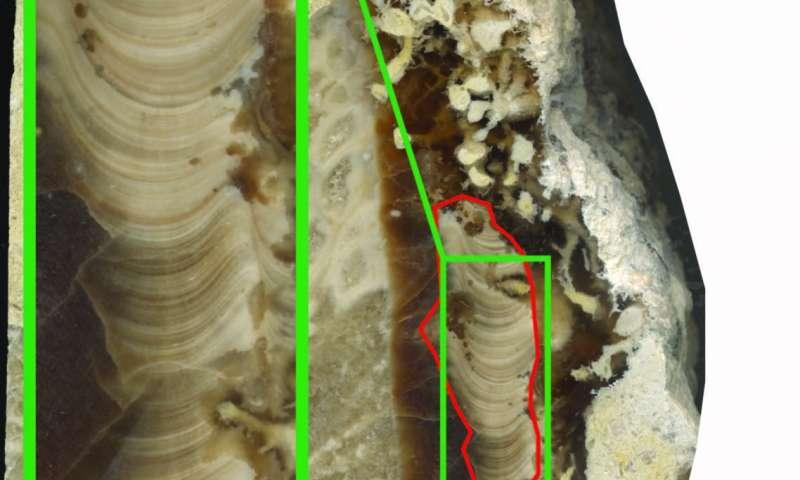 По древней раковине ученые выяснили, что 70 млн лет назад день длился на пол часа меньше