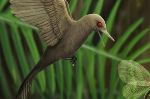 Зубастое открытие: ученые нашли кости древнего хищного колибри