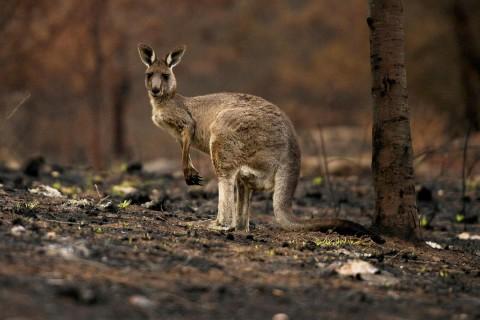 Исследование: Более 70% живых существ погибнут до конца столетия