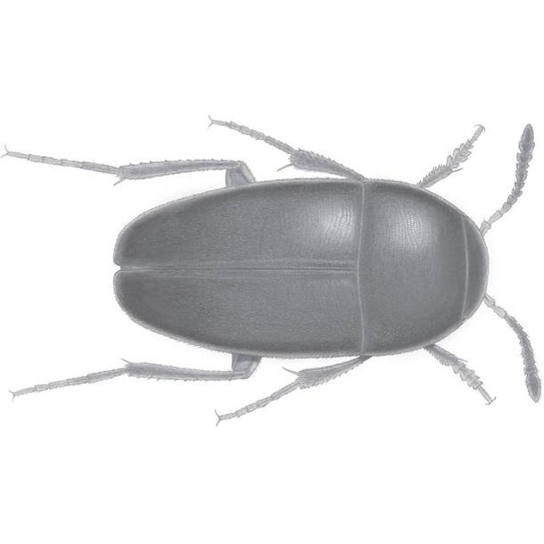 Ученые назвали новый вид жука в честь легендарной британской группы