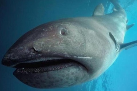 Древняя акула: в Японии рыбаки поймали редчайшего хищника