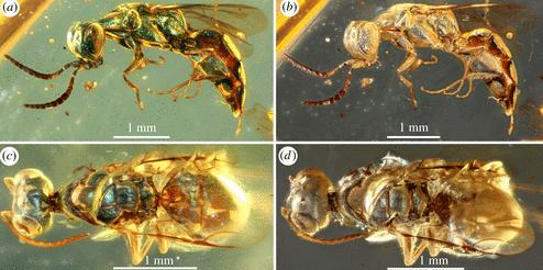 Ученые разгадали тайну насекомых времен динозавров