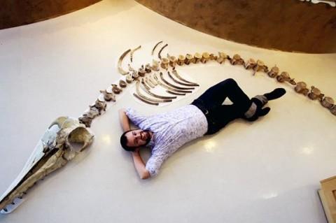В США обнаружили скелет большого хищного дельфина
