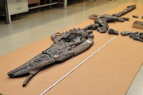 Ученые обнаружили динозавра внутри другого