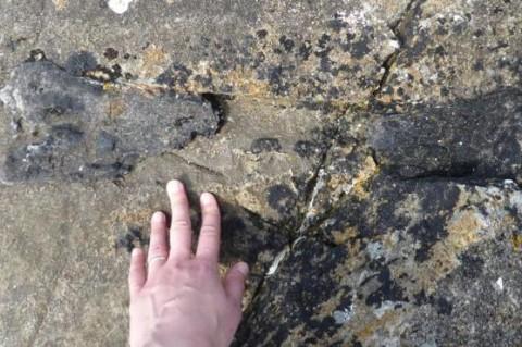 В Шотландии бегущая на встречу к группе палеонтологов ученая по дороге нашла часть динозавра