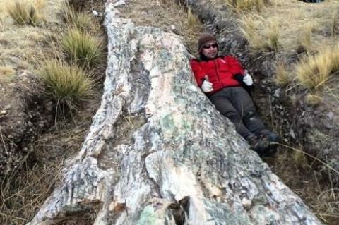 В Перу ученые нашли дерево возрастом 10 миллионов лет