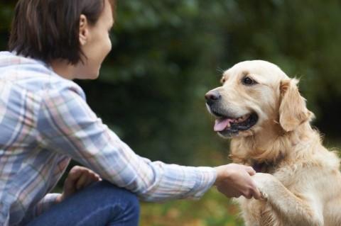 Ученые выяснили, могут ли собаки узнавать людей по лицу