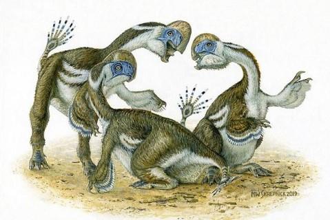 В Монголии палеонтологи нашли новый странный вид динозавра