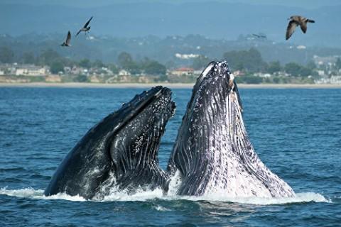 Грозит вымирание: ученые заявили о глобальной угрозе для китов и дельфинов
