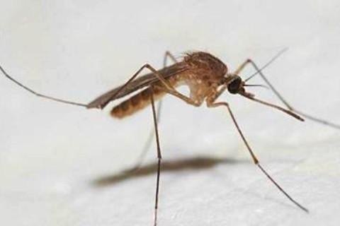 В Антарктиду прилетели жить обычные комары: ученые в шоке