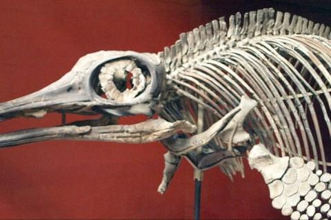 Во Владивостоке дети нашли останки доисторического животного