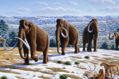 Ученые из Черновцов нашли на берегу Днепра зуб мамонта, которому 300 тыс. лет