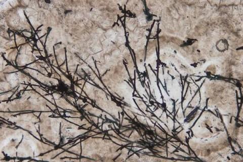 Ученые нашли грибы, которым 635 млн лет и поменяли отношение к истории Земли