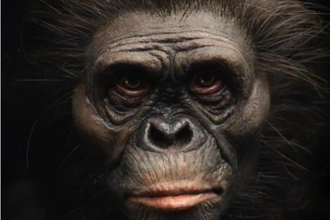 Ученые показали, как выглядели древние предки человека