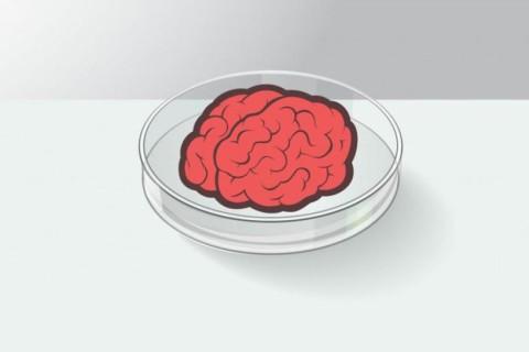 Ученые вырастили мини-мозг при помощи трехмерной печати из человеческого материала