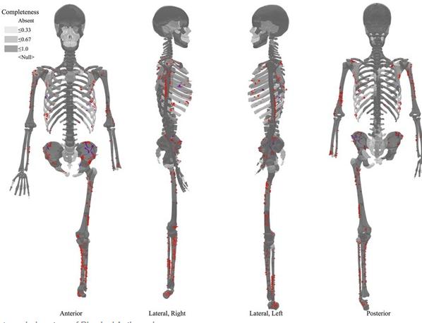 Ученые нашли истерзанный акулой 3-тысячелетний скелет